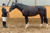 LŠZAA rīkotā zirgu vērtēšana  2010. Dina un Kohinurs
