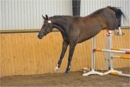 LŠZAA rīkotā zirgu vērtēšana  2010. Brīvajā lēcienā Diona Haleja